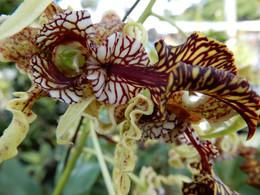 Increíble orquidea