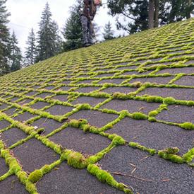 Before a Roof Shampoo®