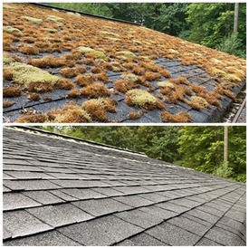 Before and After of a Mossy Roof