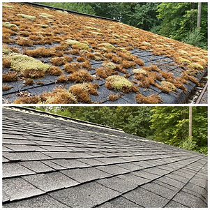 Before and After a Roof Shampoo® - Clean Pro Moss, LLC