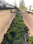 A gutter trough filled with moss buildup.