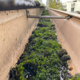 Moss in gutter trough