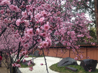 How to Enhance Your Qi in the Spring Season