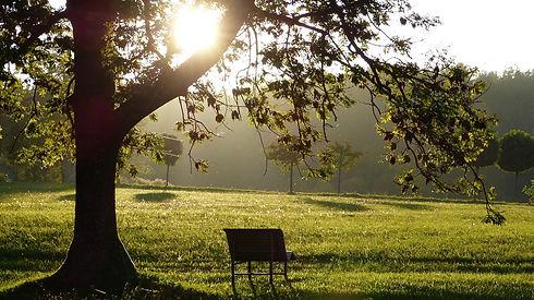 2 banc sous un arbre.jpg