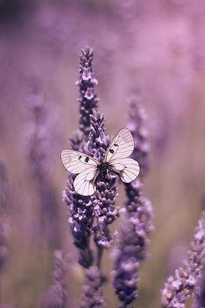 fleur et papillon mauve.jpg