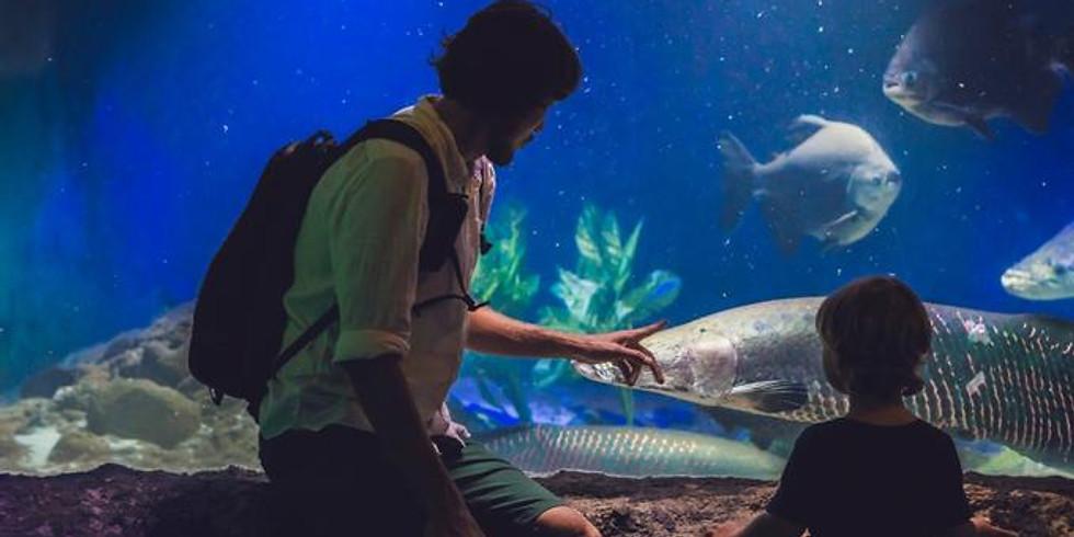 Florida Keys Aquarium Encounters -Marathon