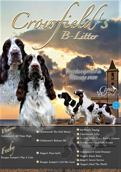 Crowfield's B-litter, English Springer Spaniel Zucht Krefeld, Kirsten Griese VDH Zucht, Goldmoore's All Time High und Bungee Jumper's Flip A Coin, Welpen, Zucht, SCD, VDH