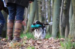 Feeby, Dummy A, English Springer Spaniel, Hundespaß, Kennel Crowfields