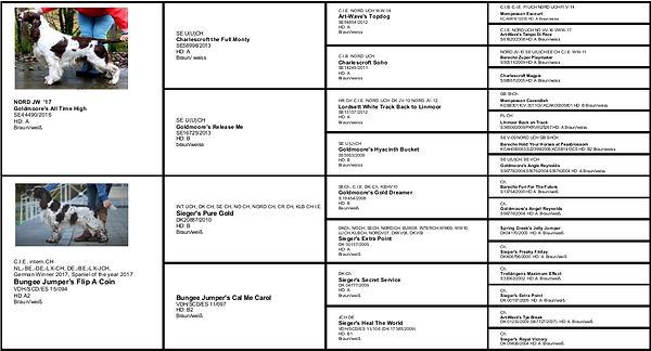 B Wurf Crowfields, English Springer, Goldmoore's All Time High, Wayne und Feeby, Bungee Jumper's Flip A Coin, Zucht Krefeld, ESS Zucht VDH