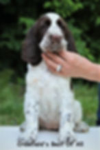 Crowfield's Best Of All, Goldmoore's All Time High, Crowfield's B litter