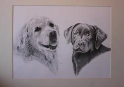 Al & Jo's dogs