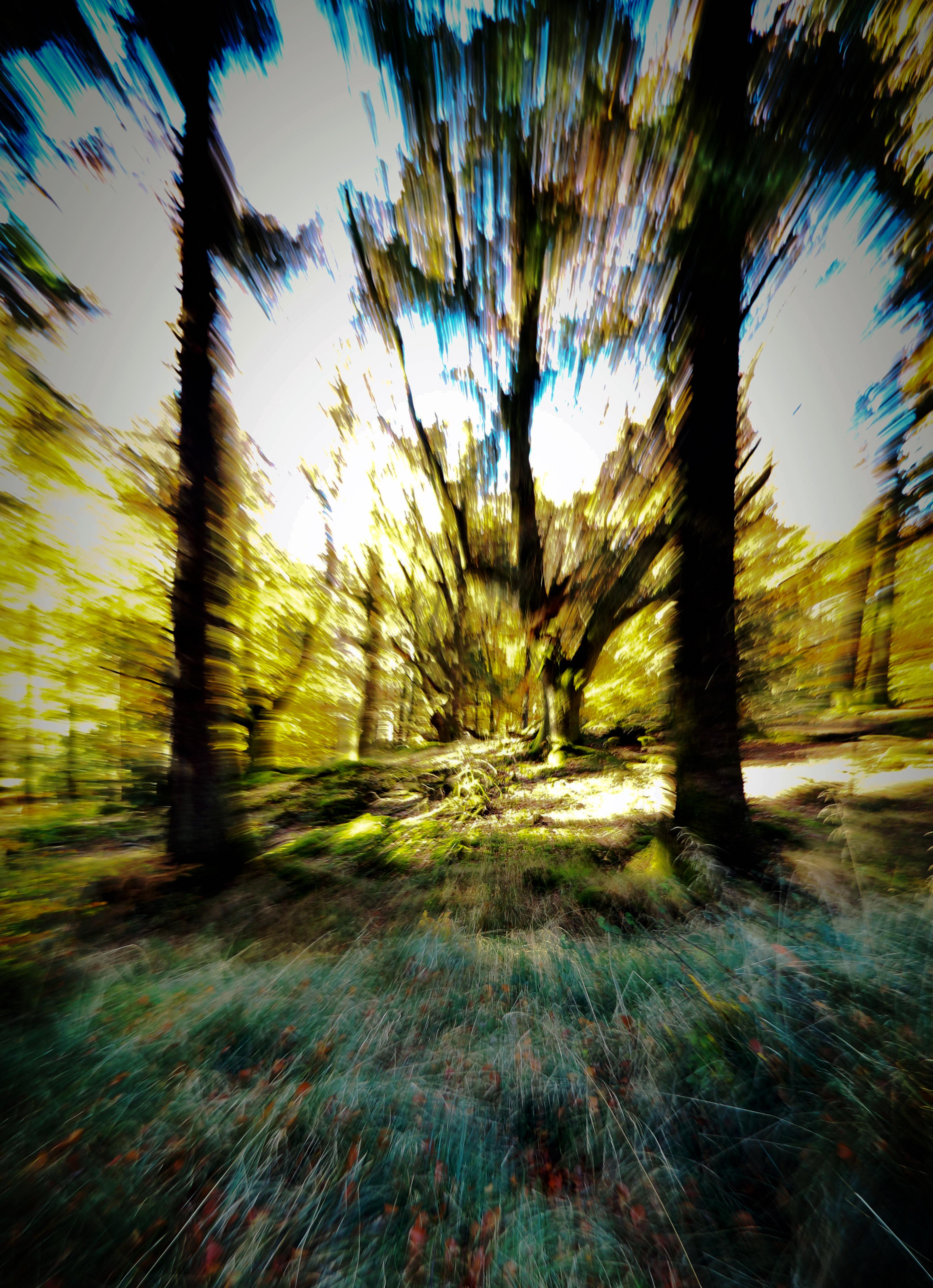 Wood rush