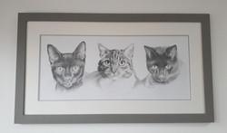 cat commission framed.