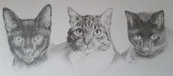Cat drawing commission