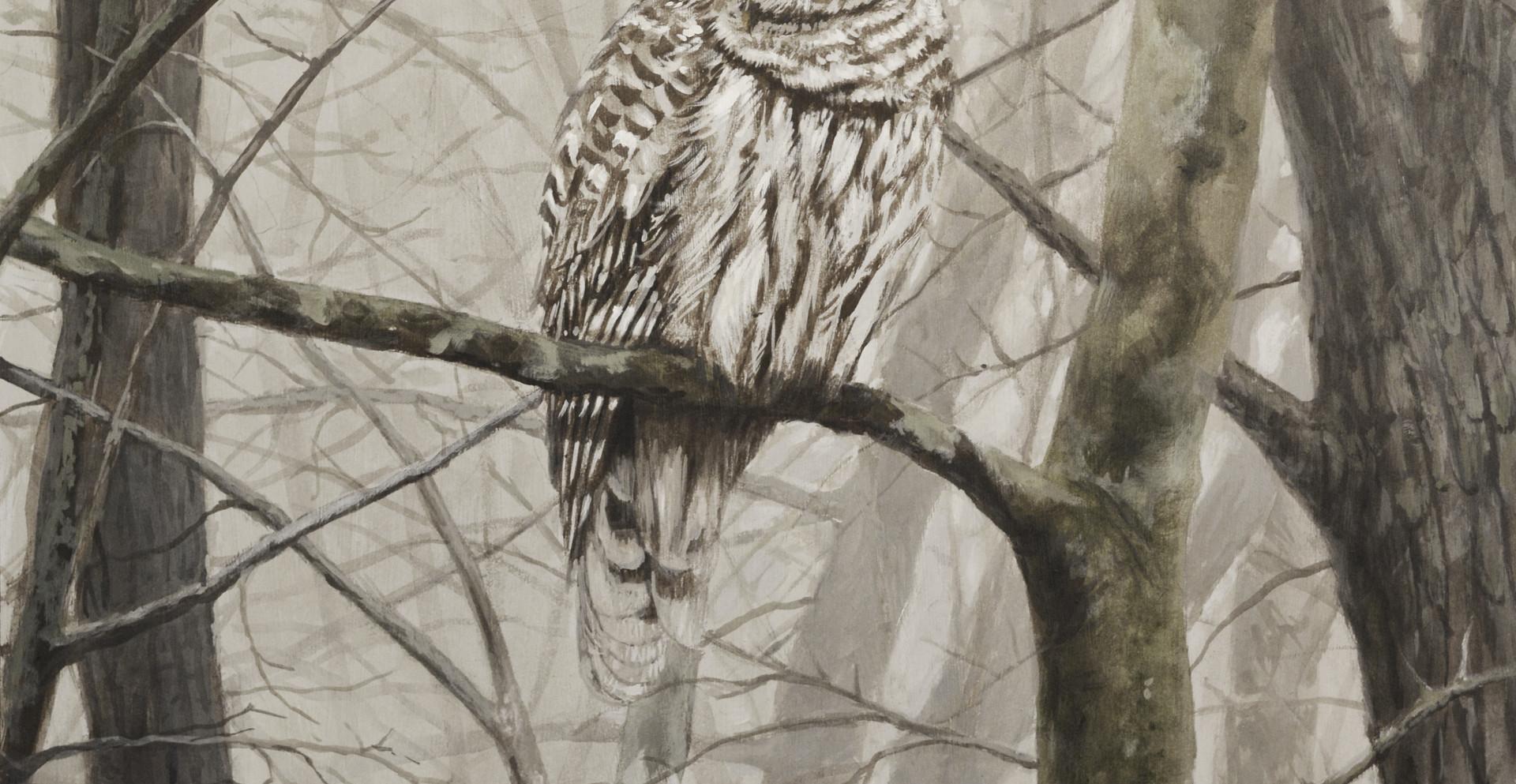 Barred Owl Final