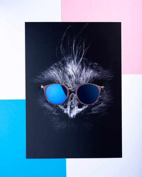 Lunettes X Animals - Sk Optique