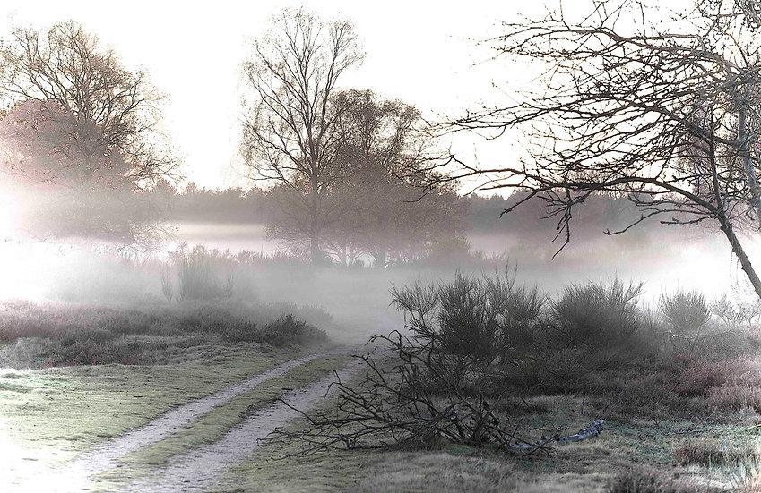 Morning Mist Again