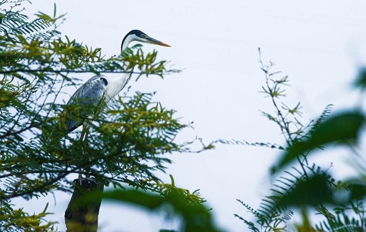 Uma das várias espécies de ave pantaneira