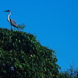 Reportagem fotográfica no Pantanal