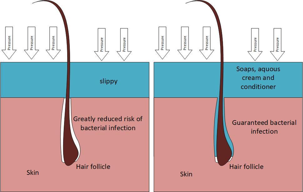 Hair follicle drawing.jpg