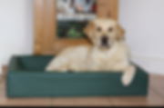 dogbedgroen.png