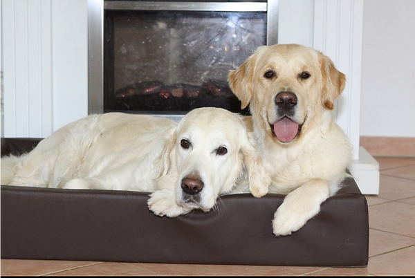 dogbed.png
