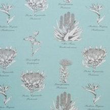 Botanical Protea (Aqua)