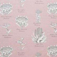 Botanical Protea (Pink)