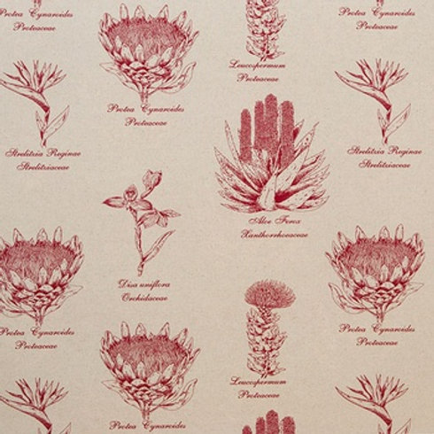 Botanical Protea (Red)