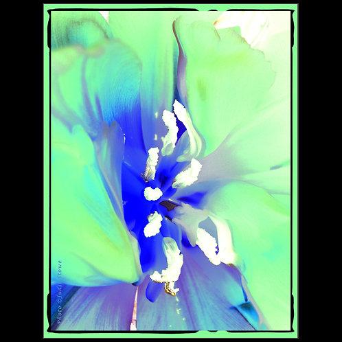 Flowers #2 - Fleurs #2