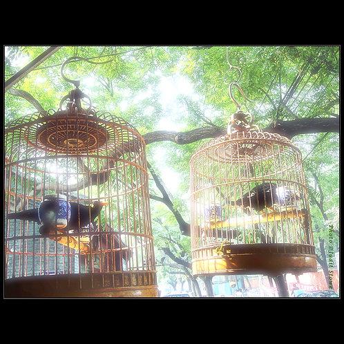 Birdcages #1 - Cage à Oiseaux #1