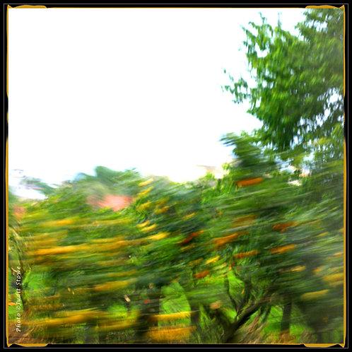 Speedy Impressions #9 - Impressions Rapides #9