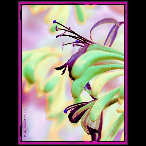 Flowers #3 - Fleurs #3