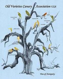 old gnarly tree ovca logo pic.jpg