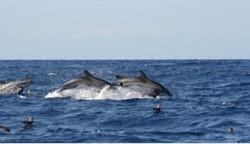 Dolphins+feeding.jpg