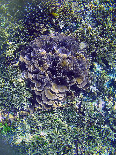Soft+sponge+coral.jpg