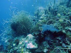 Whip+corals.jpg