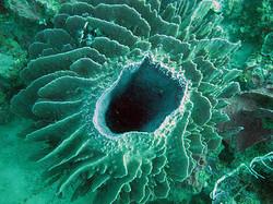 Soft+sponge+tunnel+coral.jpg