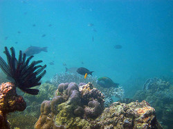 More+reef+fish+3.jpg