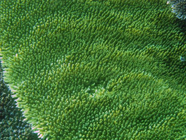 Green+coral.jpg