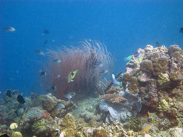 Gorgeous+whip+coral.jpg