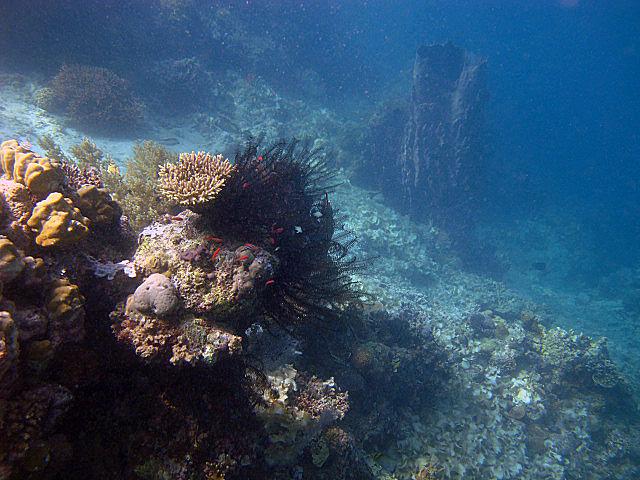 Pretty+corals.jpg
