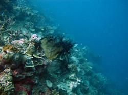 Black+coral.jpg