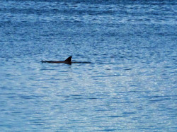 One+of+our+resident+dolphins.jpg