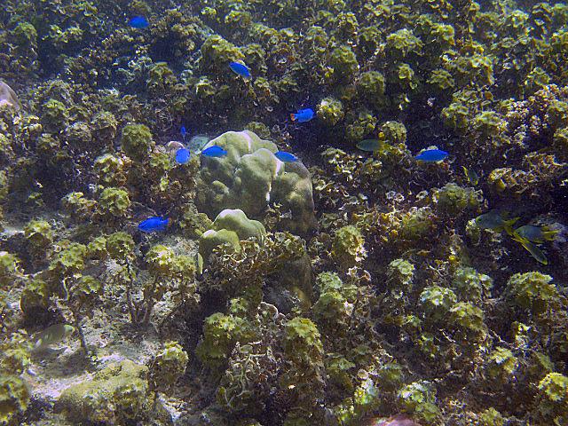 Lots+of+little+blue+fish.jpg