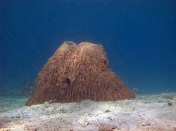 Soft+coral+mound.jpg