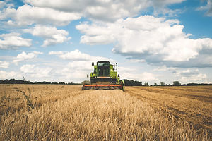 agriculture-cereal-clouds-175389.jpg
