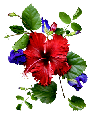 Red%20Flower_edited.png