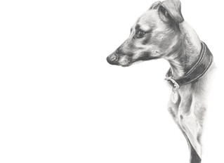 The Story of Rollo the Greyhound