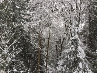 12 Basic Winter Storm Safe-at-Home Tips